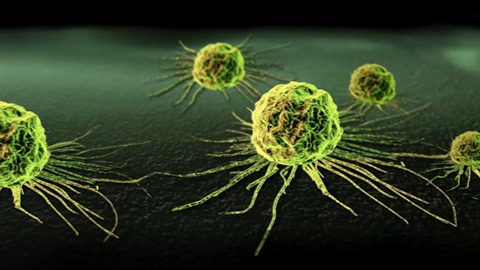 stanica raka